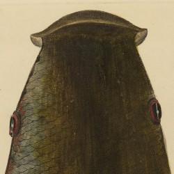 Cabeza del Mugle por el cogote
