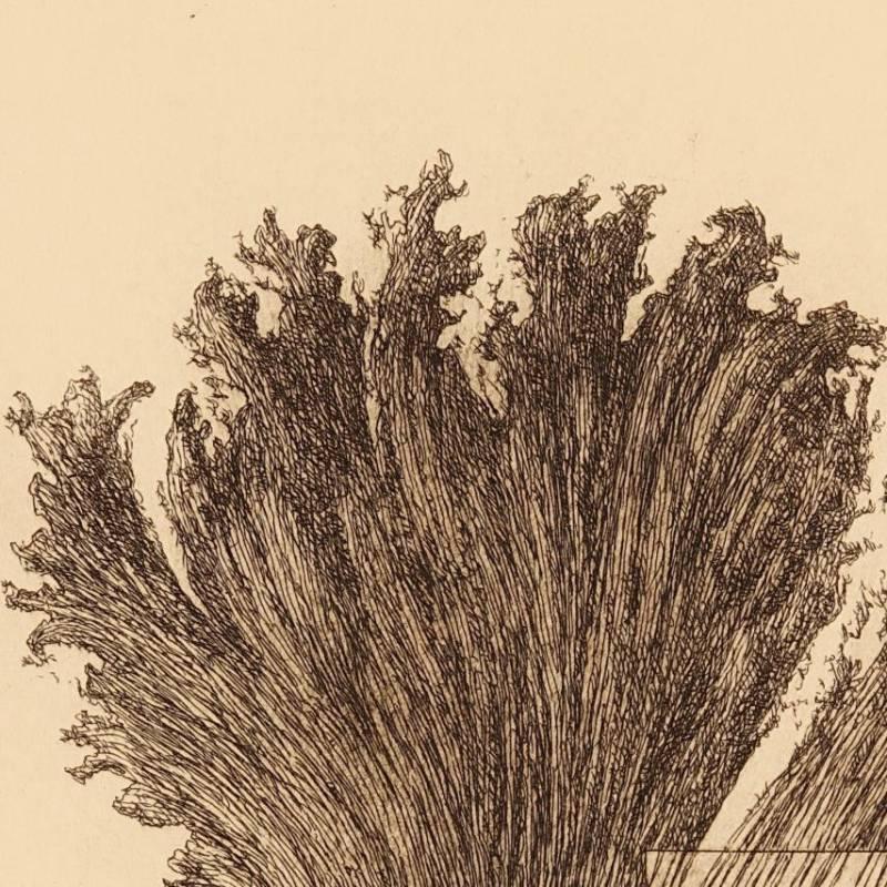 Cabeza de mujer de Pérgamo