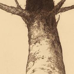 Árbol Tótem