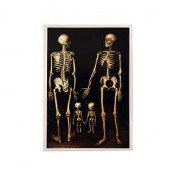 Postal Familia de Esqueletos