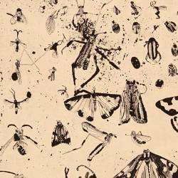 Insectos I