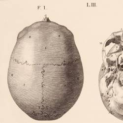 Bones III. Of the head, upper, lower region...