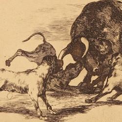 Echan perros al toro (Tauromaquia Nº25)