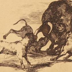They loose dogs on the bull (Tauromaquia Plate 25)