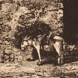 Cordova. Wall and donkey.