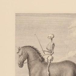 Man's skeleton position on horseback