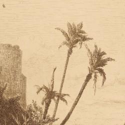 Palm tres