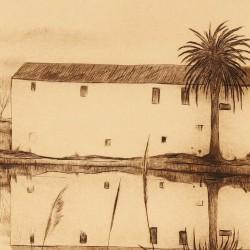Palm tree from Ebro's delta